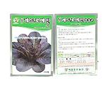 种子-036/레드로메인양상추/제일종묘/양상추/채소_