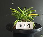 錦루각/난/동양란/부귀란/풍란/공기정화식물/나라아트_