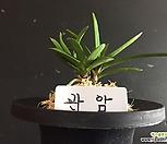 관암/난/나라아트/동양란/부귀란/풍란/공기정화식물/나라아트_