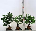 인테리어조화나무(3개)_