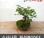 소사나무수제완성분0063_