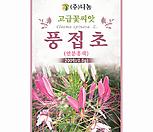 생활백화점화훼허브种子풍접초족头리꽃연粉色_