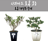 묘목合并/묘목/꽃/꽃大/향기/花盆/식물/나라아트_
