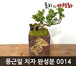 둥근叶子(丸葉)치자手工花盆완성작_Handmade 'Flower pot'