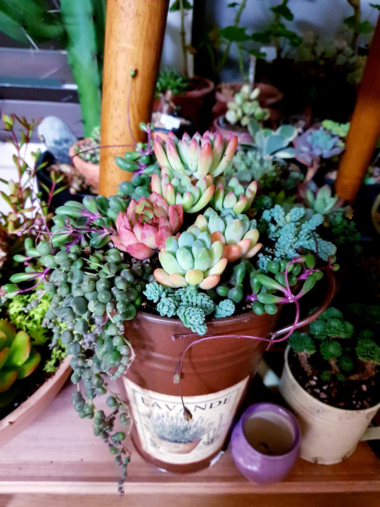 양철통과 다육… - 다육식물