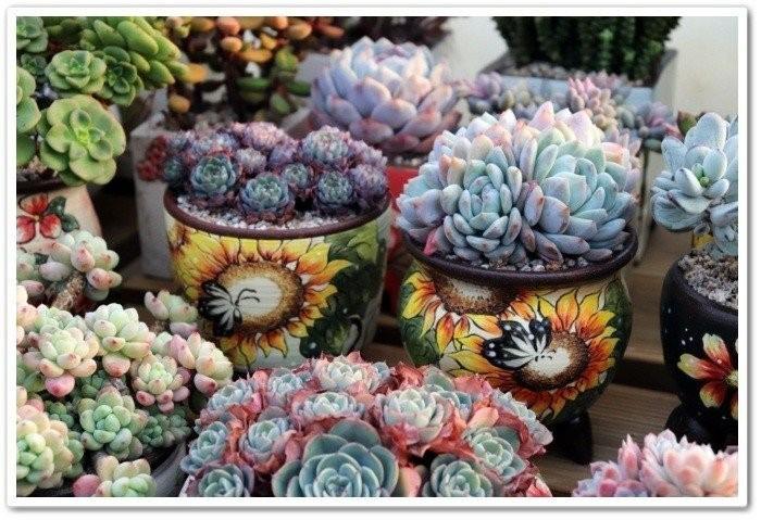 키핑장에서의 … - 다육식물