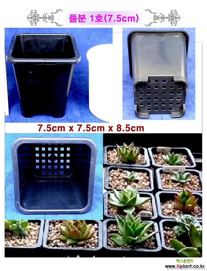 도매-1BOX 플분모여 플라스틱화분 사각포트 대량구매할인 특가화분 포트