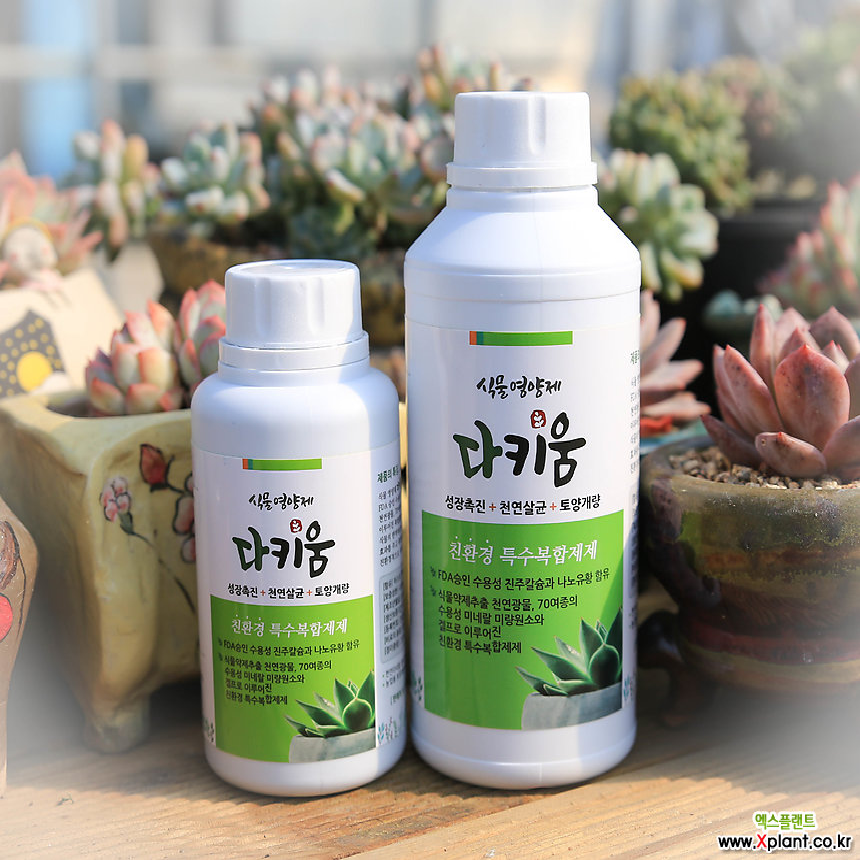 다키움/식물영양제/다육이영양제 겨울에도 튼튼하게