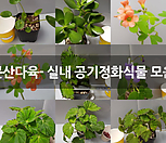 장미허브(외목대)토분포함