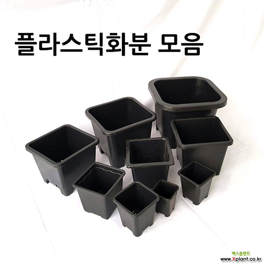 10+1 사각 플라스틱화분 플분 모음 10+1
