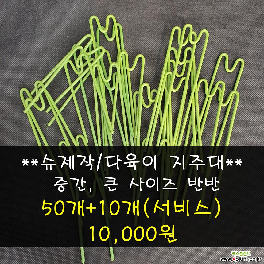슈제작/다육이 지주대(中+大)
