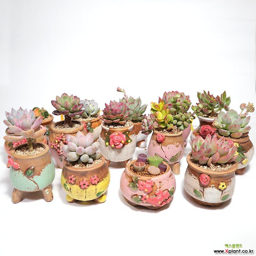 꽃 장식 수제 미니 화분 14종 세트 다육 식물 원예 바닥망 이름표 3개 포함