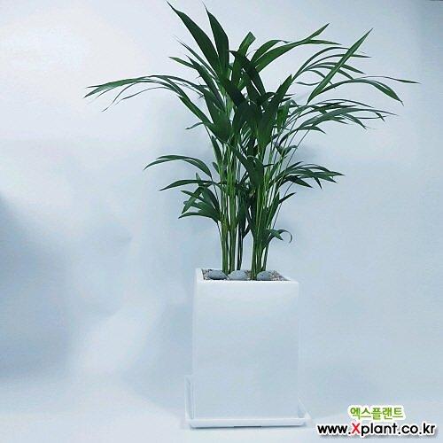 거실화분 도자기화분에 사진그대로갑니다 공기정화식물 선물용 사무실 책상위 관엽식물