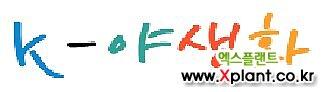 사계패랭이(잔디패랭이) 모종(5개) 노지월동 다년초 케이야생화