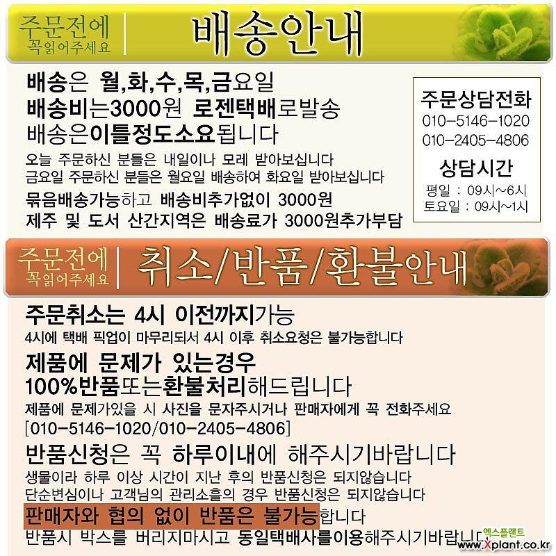 퀵실버 (메버릭계열 제라늄) 지름 10cm 소품화분 (단일품목 구매시 5천원 이상 배송가능)