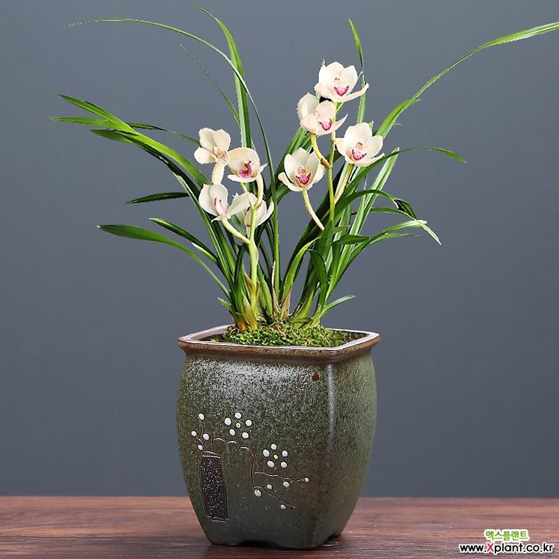 몬타나수제꽃분 수제화분 인테리어화분 다이카페