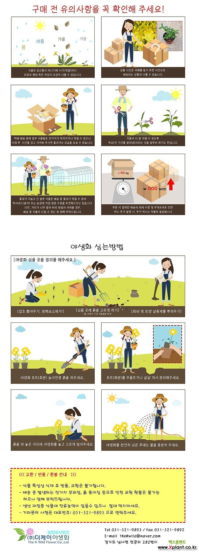 수레국화(4치포트)더케이야생화