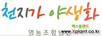 라벤다-잉글리쉬퍼플 모종(3포트) 노지월동 [천지가야생화]