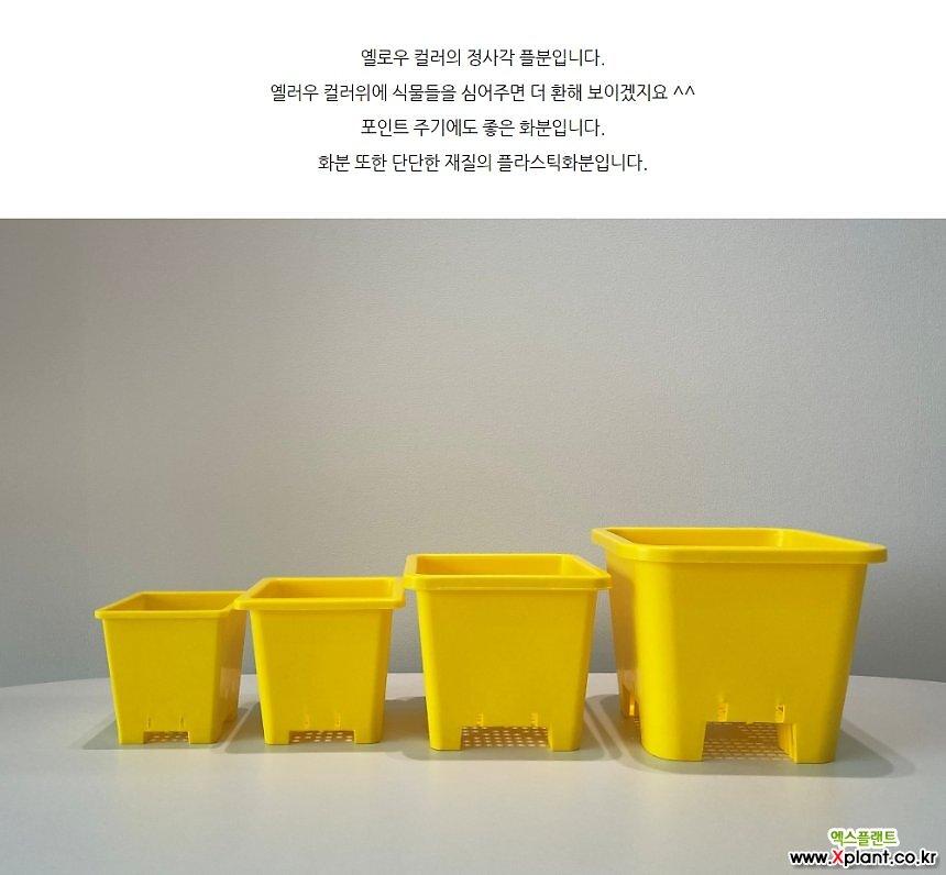 옐로우 정사각플분 플라스틱화분 튼튼한 화분 다육식물 분갈이