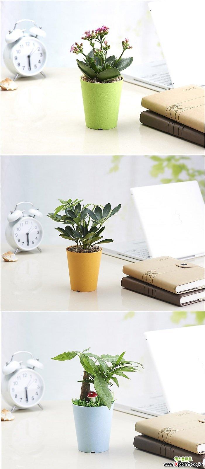 칼라원형[받침포함]플분/고급형/플라스틱화분/행복한꽃그릇