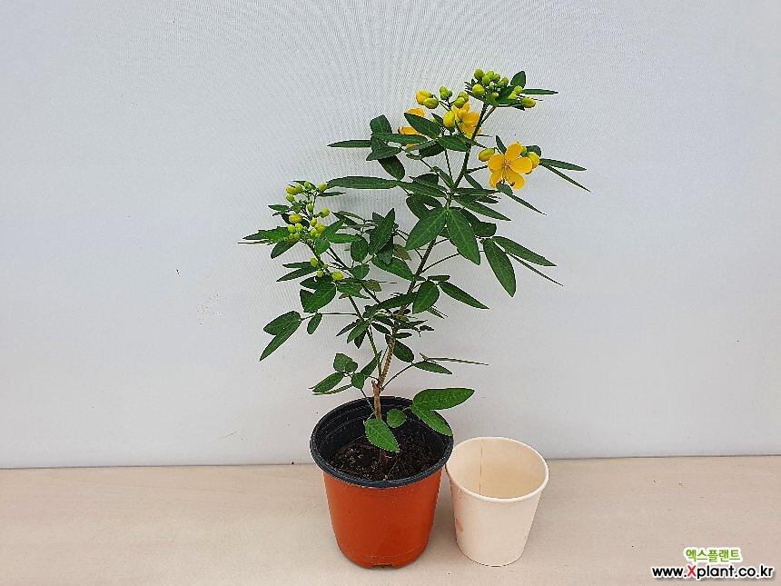 사계황호접(꽃대소품)