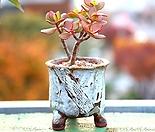 실속특가 소형 원형 대각스카프(화이트)- 작가도예 수제 화분 예쁜화분 다육화분 베란다화분 개업화분 특이한화분 선물화분 -IS-소형-둥근사각형 인아트스튜디오