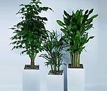 공기정화식물 선물용 거실 사무실 책상위 관엽식물