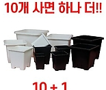 사각 플라스틱화분 튼튼사각다리화분 플분 10+1