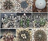 세계 선인장 다육식물 모음.
