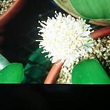 4계장미.프랑스장미.쟈뎅 드 프랑스.과향과몰약향기강함.예쁜산호핑크색.색상너무예쁨.(꽃형 예쁜형).울타리.넝쿨장미.월동가능.상태굿..늦가을까지 피고 합니다..