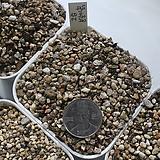 고급 분갈이흙 (5kg)다육전용/다른식물분갈이가능