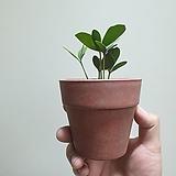 멕시코소철소품공기정화식물10203520