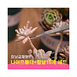 교체형나이프 다육이적심용나이프 원예용나이프/원예자재 행복상회 행복한꽃그릇