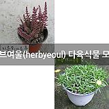 허브여울(herbyeoul) 다육식물 모음 