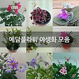 방울기리시마 소품