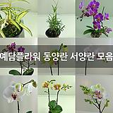 꽃대많은 디네마 소품
