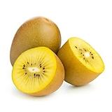 골드키위트리 화분상품 암그루 수그루♥키위 키위나무 골드키위나무|