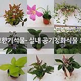 랜디엔젤아이스(핑크소품)