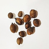 뷰티아야자나무씨앗100g(50립)|