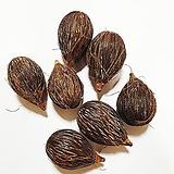 여우꼬리야자나무씨앗(10립)|