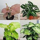 모두플라워- 실내 공기정화식물 모음