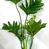 공기정화식물~호프셀렘