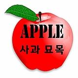 3년생 사과나무 묘목 품종별 모음♥옵션 다양|