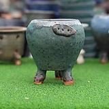 토어 수제다육화분 개구리롱