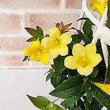 [도희씨네 정원] 은은한 천연향수 노란색 개나리 자스민170|
