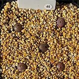무늬종 레이폴드티 12두군생 TS419 23