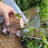 행운목 (토막수경재베 공기정화식물) 신상품|