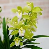 [도희씨네 정원] 봄빛을 닮은 스프링파루 150|