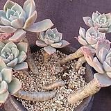다육이 미니 꽃 그림 화분 9개 세트 2타입 다육 식물 원예 바닥망 포함 키다리 네임택 3개 포함