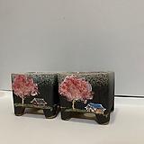 2종 묶음 - 벚꽃나무와 강아지집|